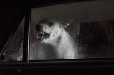 """The Silence of Dogs in Cars"" project photographed by Martin Usborne"