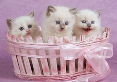 Three little kittens,  will surely start shittin',  if you don't get them out of this shot...