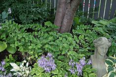Backyard Garden With Solomon's Seal Plants And Statue : Graceful Solomon's Seal Plants