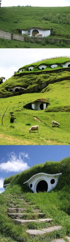 Sheep houses The Hobbit scenes from Lord of the Rings Movie Trilogy were filmed on a hillside lot in Matamata, New Zealand. Now the little Hobbit Homes have become a tourist attraction, but also they became homes for some of the sheep from a nearby farm