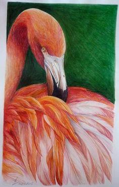 Red flamingo pencil color drawing, using Prismacolor pencils.