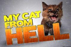My Cat from Hell season 8 episode 2 :https://www.tvseriesonline.tv/cat-hell-season-8-episode-2-watch-series-online/