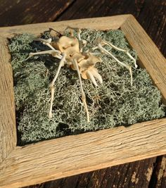Osteo Arachnid: Bone Spider Sculpture Wall Art - Forgotten Bonelust Collaboration Bone Art Piece by BoneLust on Etsy