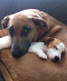 20 dog BFFs that will make you insanely happy