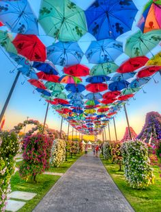 Miracle Garden - Dubai, UAE