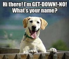 Dog memes I wonder sometimes if they even do know their name? #Funnies #DogMemes #NeverGetsOld