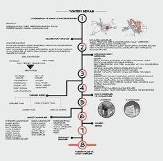 Yöntem Şeması