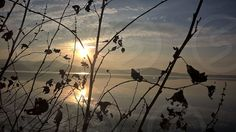 Photo by Adelajda Gjoshi - Viverone lake, Italy