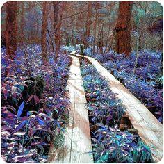 【naaa_nya】さんのInstagramをピンしています。 《木道 #木道#遊歩道#上高地#長野県#松本市#国立公園#木#林#森#山#森林#森林浴#散策#散歩#登山#トレッキング#ハイキング#休み#休日#休暇#リゾート#旅行#観光#観光地#自然#植物#緑#hiking#green#nature》