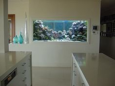 Inserting an aquarium indoors can appear like a very enormous challenge. Besides making the atmosphere beautiful and with persona, the aquarium takes tranquility to the gap as a result of the closest contact with nature. Aquarium Mural, Aquarium Design, Reef Aquarium, Marine Aquarium, Saltwater Aquarium, Saltwater Tank, Fish Tank Design, Aquascaping, Interior Decorating
