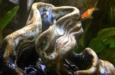 Etsy shop https://www.etsy.com/listing/504705808/waterfall-cave-sculpted-rock-aquarium 🐟💚 #betta #cichlid #natureart #etsy #etsyshop #charity #ceramic #ceramicsculpture #guppy #tetra #coral #freshwater #aquacape #art #glazes #installationart #maker #craft #fishcave #weirdartwork #green #nature #communitytank #nano #pottery #sculpture #contemporaryceramics #clayart #makersbiz #madeinaskutt #etsyscout #fishluv