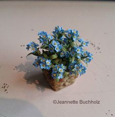 a little pot of Forget-me-not as a sign for the first flowers in spring