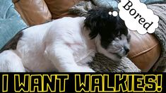 Dog Walking, Dogs, Animals, Animales, Wag The Dog, Animaux, Doggies, Animal, Animais