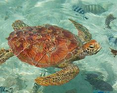 Swimming with sea turtles is on my bucket list.