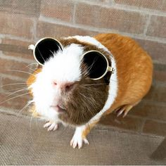 The Daily Guinea Pig                                                                                                                                                                                 More