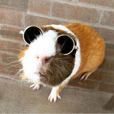 The Daily Guinea Pig                                                                                                                                                                                 More