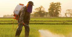 non hodgkins lymphoma pesticides http://articles.mercola.com/sites/articles/archive/2014/06/03/non-hodgkins-lymphoma-pesticides.aspx