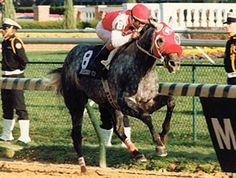 Black Tie Affair, 1991 Horse of the Year who defeated Twilight Agenda, Strike the Gold and Unbridled in the 1991 Breeders' Cup Classic. He won the Iselin, Stephen Foster, Michigan Mile and One-Eighth Handicap, Hawthorne Gold Cup Handicap, Cornhusker Breeders' Cup Handicap, and Washington Park Handicap and over 3 million dollars. He is the sire of Evening Attire and Formal Gold.