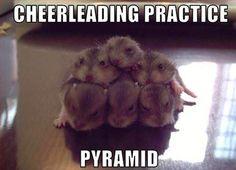Hamster pyramid…