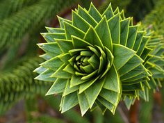 Incredible Photographs of Fractals Found in the Natural World