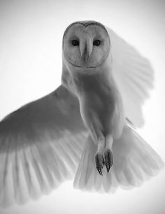 I see all... i hear all... and i know im beautiful... all that makes me an owl: wise