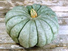 10 Unusual Edible Pumpkins -