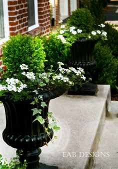 I like these kinds of pots by the front door. Not too flowery.