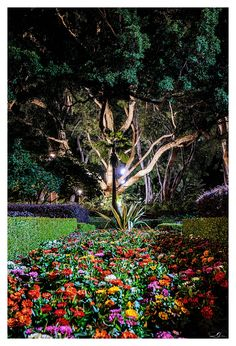 Midnight Garden by mdomaradzki.deviantart.com