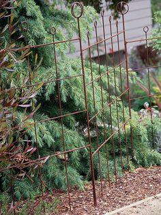 Prostrate Deodar Cedar