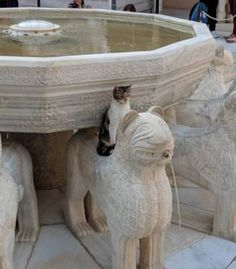 Just A Collection of Unconventional Cats. I Love Cats, Crazy Cats, Cool Cats, Amor Animal, Mundo Animal, Animals And Pets, Funny Animals, Cute Animals, Cute Kittens