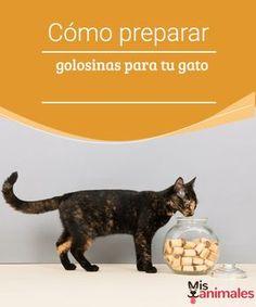 Cómo preparar golosinas para tu gato - Mis animales  ¿Te gustaría que tu mascota disfrutara de chucherías caseras? Si es así, te mostramos cómo hacer golosinas para tu gato de una manera fácil y económica.