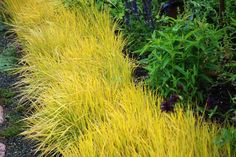 Ornamental Grasses Bring Low Maintenance To The Landscape | Greenhouse Grower