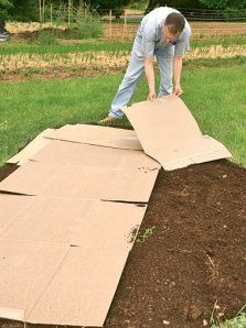 cardboard REALLY works for preventing weeds-much cheaper also
