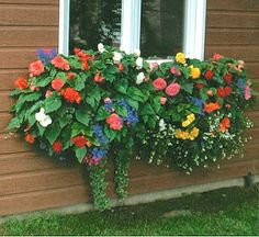 Hybrid begonias are great in shaded window boxes