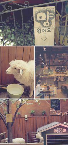 Thanks Nature Cafe aka sheep cafe in hongdae, seoul xD