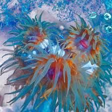 Image result for marine life coral