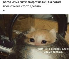Nao Memes The post Nao Memes appeared first on Memes Apaixonados. Sad Cat Meme, Cute Cat Memes, Funny Cats, Bad Memes, Funny Video Memes, Stupid Funny Memes, Russian Cat, Russian Memes, Animal Pictures
