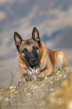 Always by TanjaBrandt #animals #animal #pet #pets #animales #animallovers #photooftheday #amazing #picoftheday