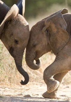 elephants are a symbol of peace, power, dignity and intelligence in india. they're also very cute:)