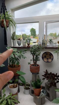 Learn how to plant in pots without drainage holes so that you can keep your plants alive. You can turn any vessel into a planter if you know how to properly plant in pots without holes. Continue reading to find out what I like to. Decoration Plante, Plant Aesthetic, Aesthetic Rooms, House Plants Decor, Big House Plants, Bedroom Plants Decor, Diy Garden, Balcony Garden, Garden Ideas
