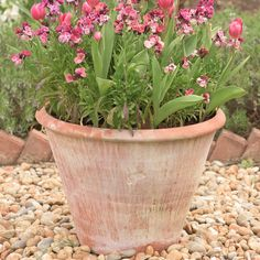 Buy Lucca terracotta pot: Delivery by Waitrose Garden in association with Crocus