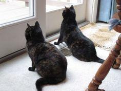 Birdwatching: Environmental Enrichment for Indoor Cats
