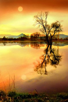 Sunset on the water Tree on water, Sélestat, Alsace, FR - Jean-Michel Priaux Foto Nature, All Nature, Amazing Nature, Amazing Photography, Landscape Photography, Nature Photography, Reflection Photography, Beautiful World, Beautiful Images