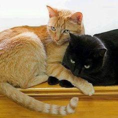 A beautiful friendship…