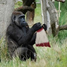 Knitting is a great way to chill out no matter your species apparently...