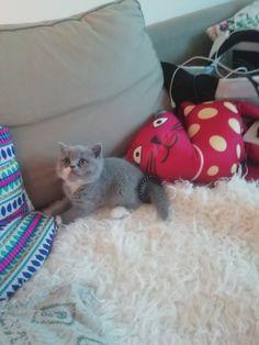 Kitten love al 7 weekjes 🐨🐾🍀