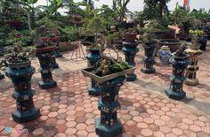 Bonsai garden of a circus artist- vườn cây cảnh, vườn lan, hoa lan, lão nông, vườn đào, cây ngũ quả