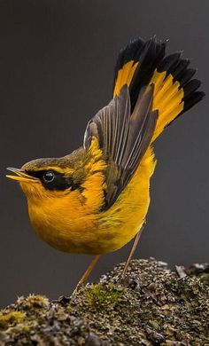 /I can't identify this Bird But I really Like it 🙏🏽 A selection of bird photos Different Birds, Kinds Of Birds, All Birds, Little Birds, Birds Of Prey, Love Birds, Angry Birds, Ohio Birds, Birds In The Sky