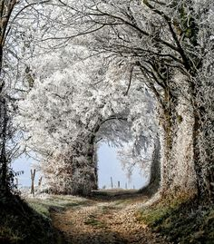 ❥ Winter frost on trees