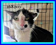 ★$245 in pledges★ NEEDS PLEDGES/RESCUE/ADOPTION -PLEASE! PLEASE SHARE!! ★Cat in Arizona needs immediate rescue. Let us help him find a forever home! Please share!!!